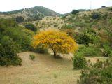 """Despego Consciente: Trekking """"Naturaleza y Alma"""" Nivel 1, 1 de octubre 2011, Reg. deValpo."""