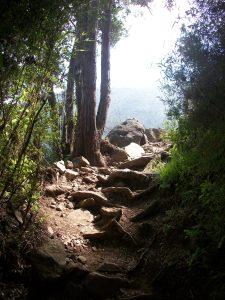 Parque Nacional La Campana, Sendero El Andinista