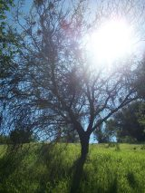 Despego Consciente: Trekking Naturaleza y Alma en Quilpué 06. Jul.2013
