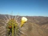 Centro Pineal – Pituitario y Células Emocionales: Trekking Naturaleza y Alma en Illapel 16. May.2015